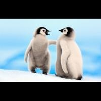 南極,船票如何便宜買!?