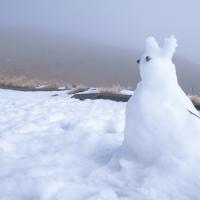 全台賞雪景點大蒐集 寒流來襲準備出發囉!台灣各大賞雪景點推薦