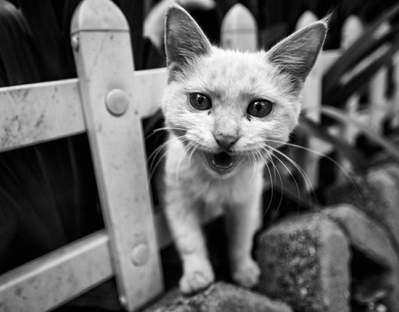 髒兮兮全身是傷的流浪貓,沒想到最後竟然...貓奴們淚崩了!
