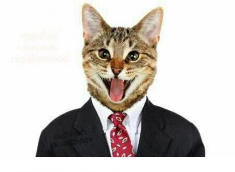 警惕!印良人分享「貓咪咪」照片,竟遭Facebook封閉帳戶?!連貓咪咪都不能分享了?