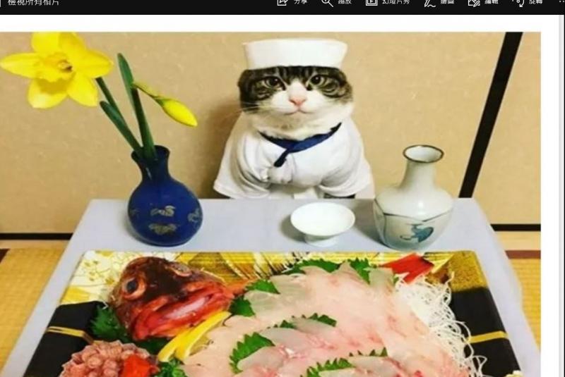 世界上最萌的大廚貓,請問你是吃可愛長大的
