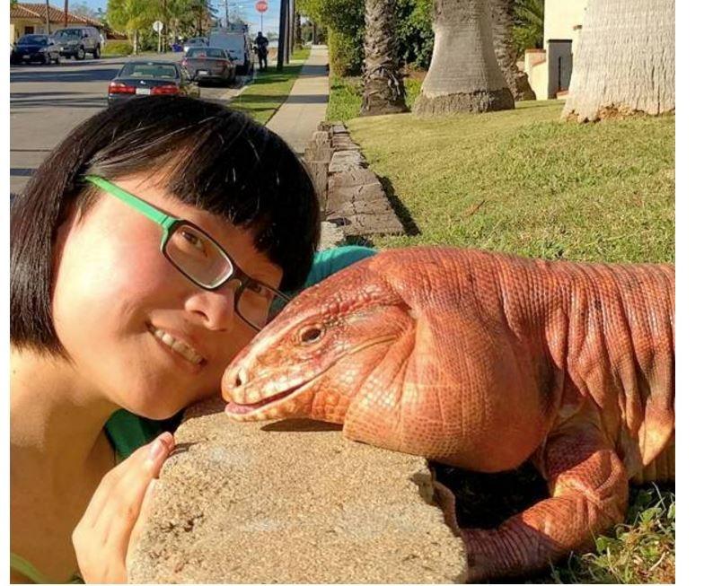 她養了一隻紅泰加巨蜥後,這萌且驚悚的畫風,也是沒誰了...
