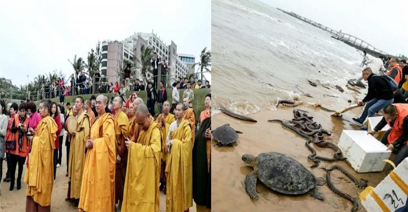腦殘大陸和尚把「蟒蛇」放生到海裡…到了晚上海灘出現的畫面超恐怖,遊客看到全都爆吐!!