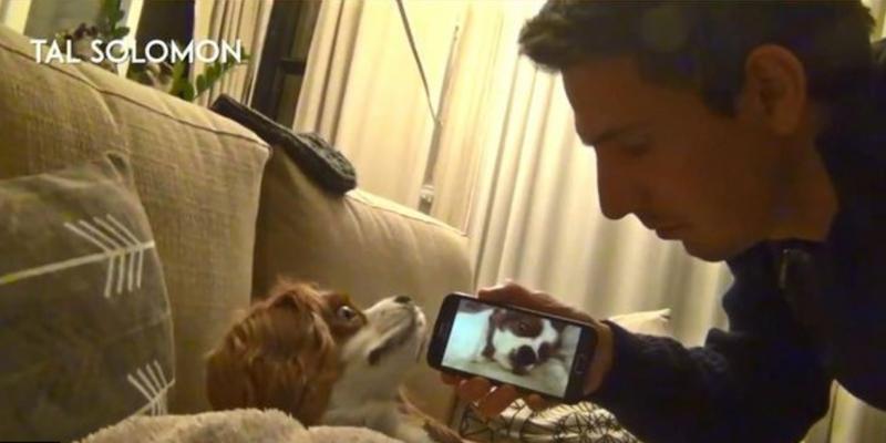 狗狗睡覺打呼震耳欲聾,主人竟然想到這一招來反制他!看完影片後都心疼融化了...