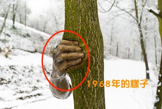 「這隻手」從1968年就開始「抓著」這棵樹,看到它「現在樣子」的人都嚇到臉色發青叫不出聲來了!