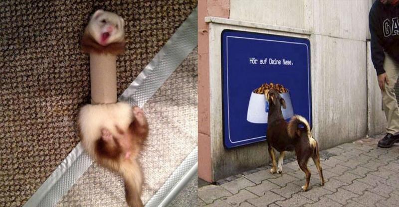 超療癒!你以為動物不會像人一樣耍蠢?你錯了!24張動物耍蠢照片讓你對你家的寵物改觀#3真的是蠢到超可愛!