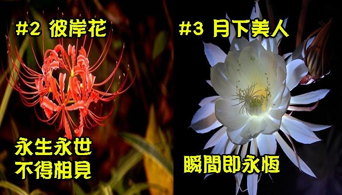 千萬別送錯花!世界10大讓人「完全心碎」的「悲傷花語」,連彼岸花也只排得上第二名!