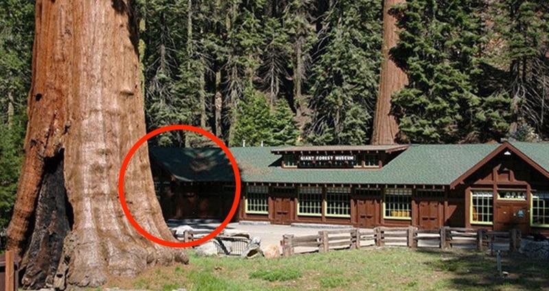 史上最靠北復仇!他不爽政府移樹,竟籌備 3 年在全市種「127顆巨木」...網友:市長玩完了XD