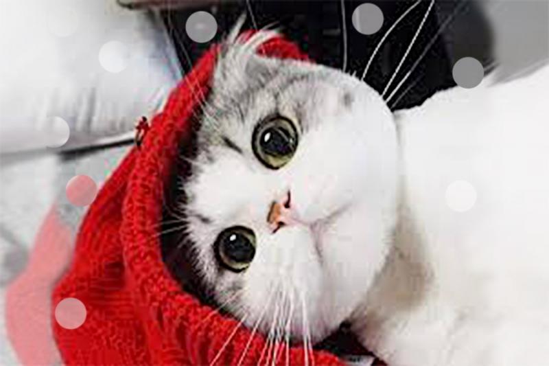 讓家裡貓小孩遠離腎衰竭的妙招