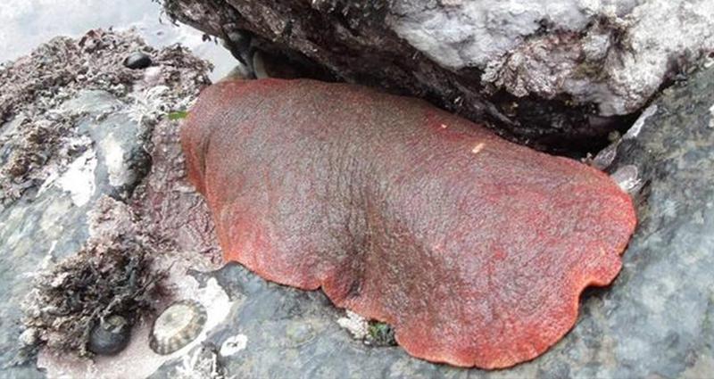 男子在海邊發現有詭異生物在蠕動,「用力翻過來」竟親眼看到「超血腥爆口鮑魚」...(慎入)