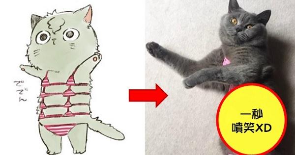 神還原超萌「貓咪比基尼」!8 張大陸網友「自製比基尼給家中貓咪」穿,#5 性感小野貓、#2 一臉不願意啊XD