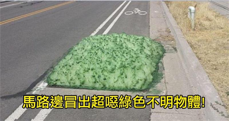 網友在路上驚見「綠色軟嫩物體」,上網求助後網友卻說「不要碰快點離開」沒想到...