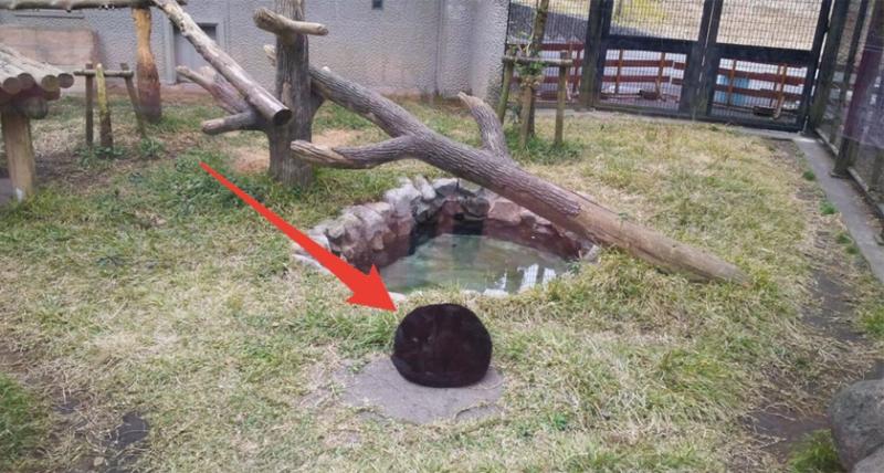 他滿心期待來動物園卻只看到一坨「超無聊黑色毛球」,po上網內行網友卻猛留言「超罕見,快拍照!」