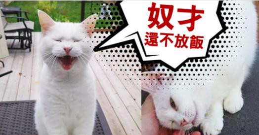 本以為是蹭飯的流浪貓,沒想到,主子只是把你當外面養的野小三啊啊啊啊~~