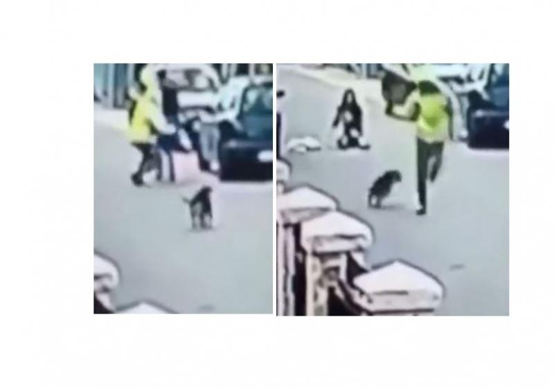 嫌犯正試圖襲擊一名路過的女子,而冒生命危險救她的卻是一隻流浪狗!