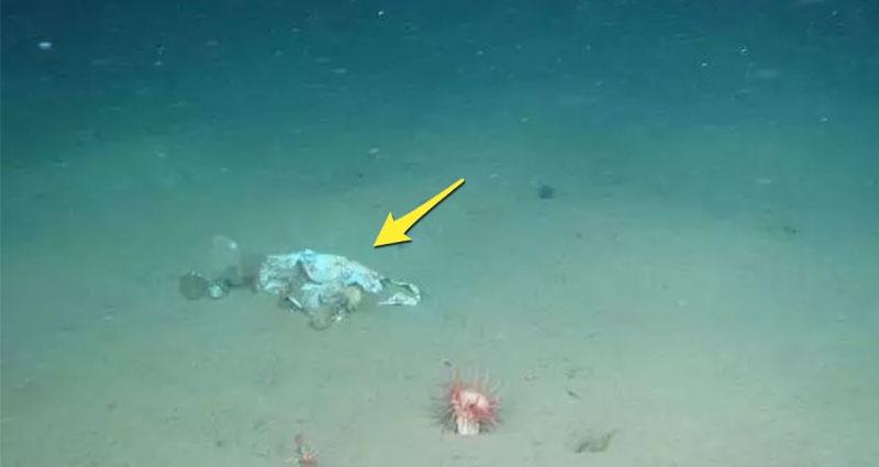 他們探勘世界最深的海底 拍下了這些令人從頭涼到腳的畫面