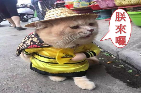 網紅霸氣喵天天「微服出巡」菜市場,「喵喵~再不買我吃了喔」萌死人了!