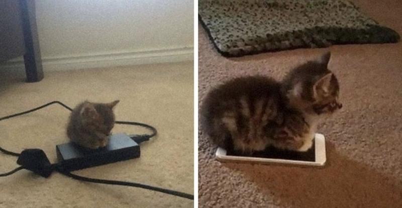 「为什幺你需要养只猫?」国外推特分享15张照片给网友15个无法反驳的理由!