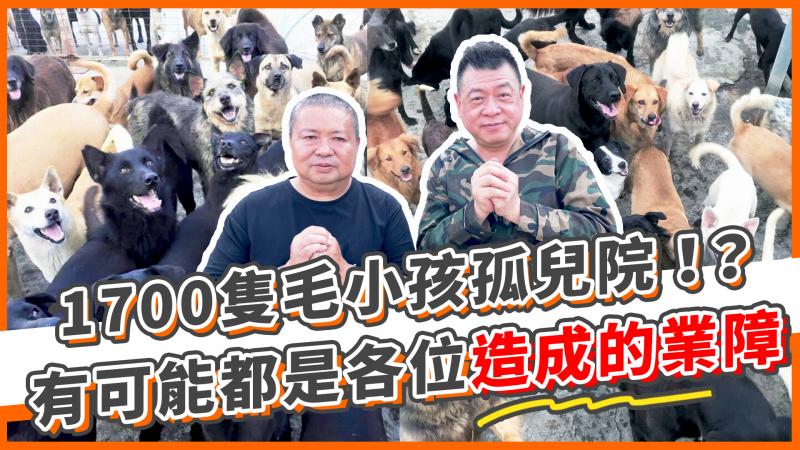 影/震惊!共收留1700只的流浪狗!孙德荣拍摄影