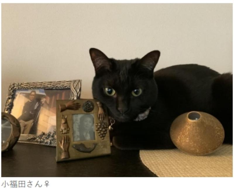 日本幼猫高达18000只被扑杀!小泉今日子组「黑猫同盟」发新辑